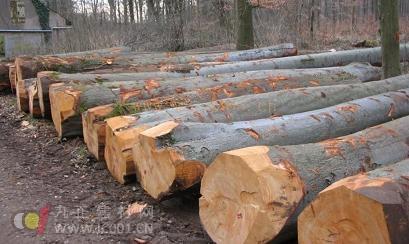 重新认识橡胶木和橡木的区别