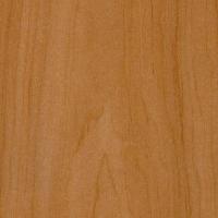 WO019 红枫桦