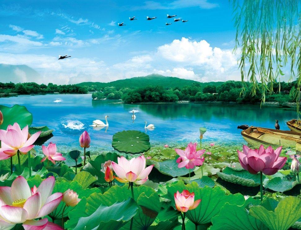 湖泊荷花风景设计图片