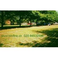 植草地坪,高承载透水植草地坪,生态植草地坪,超级植草地坪