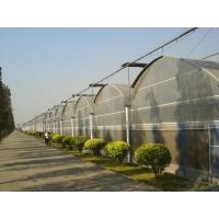 青州花卉大棚建设|花卉大棚建设价格||花卉温室建设价格
