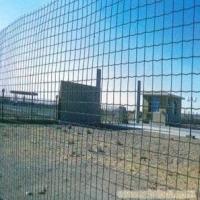 专用养鸡网,养鸡铁丝网,散养鸡网,围栏网,养殖围网
