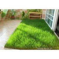 北京无土绿化草坪生产厂无土仿真草皮