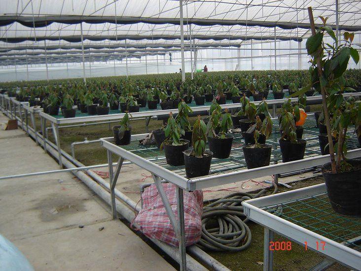 温室大棚专用翅片管散热器 园艺暖气片