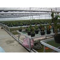 温室取暖温室暖气片厂房供暖大功率暖气片工业翅片管
