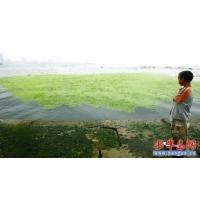 供应广州园林工具湖泊水处理除藻设备-光催化除藻杀菌器