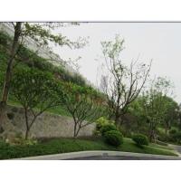 树苗出售 花圃绿化 园林工程