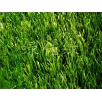绿佳绿是优质的草坪供应商,技术先进,设备齐全