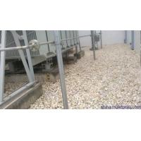 河南变压器鹅卵石5-8cm厂家价格