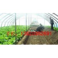 大棚育苗土壤发热线 空气加热线农民增产好帮手