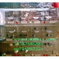 鸡鸽兔笼养殖笼具养殖器材牛栏网养鸡网铁丝网圈玉米专用网