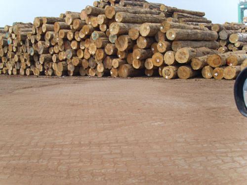 常熟木材市场 - 常熟和协