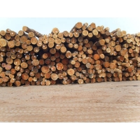 常熟木材原木