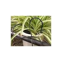滴箭系统|直滴箭|1/4滴箭系统|盆栽花卉滴灌