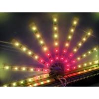 LED3528贴片灯带5050贴片软灯条防水灯条
